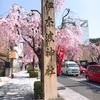 伊奈波神社の枝垂れ桜