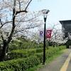 """京都 大学キャンパスの桜と嵐電線路の桜並木は""""春色の""""懐かしさ!"""