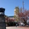 北海道 小樽市 散策 / 桜を求めて小樽運河➡堺町通り➡花園