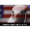 アメリカの良心は泣いている