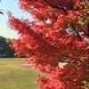 黄檗公園でのんびり美しい紅葉を楽しんでみました。