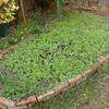 庭花壇の状況