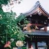 世尊寺のノウゼンカズラ(7月上旬~7月下旬)