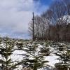 モミの木保育園にも雪が
