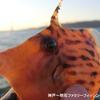 【釣り納め】今年最後のファミリーフィッシングはアジ・カワハギ・クジメ・ガシラで満足の締めくくり
