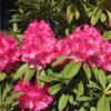 春爛漫、中央地区の花!