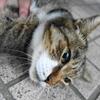 9月後半の #ねこ #cat #猫 その4