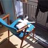 猫の門脈シャントの検査で農工大動物医療センターに行ってきた