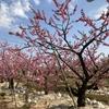 ☆ 花 桃の花   & 猫