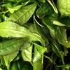 奈良 水間町産茶葉で和紅茶を作る
