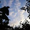 プルーンの収穫を 改訂 3