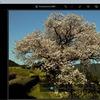 「Photoshop Express」のフィルター「ポートレート」カテゴリを試す。納戸料の百年桜で。
