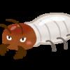 【賃貸トラブル】貸家の白アリ