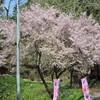 4月24日(金)春爛漫