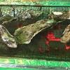 五稜郭駅前の牡蠣奉行へ行ってきました!