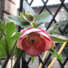 小さな春の庭