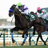 【京成杯2018】予想オッズ・出走馬分析〜牡馬クラシックを沸かせる馬はでるのか