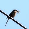 「文化の日」の朝に出現した「野鳥たち」