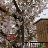 12月22日・日曜日 【うんちくま25:造幣局の桜 14】