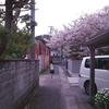 春の午後、季節の終わりを追いかける