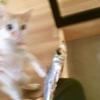 ネコ様の前で人間が踊る、