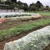 台風の影響で野菜の価格が高騰しますかね?