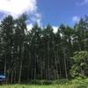 7/29〜30 夏の長野旅① 廃村キャンプ&日本のチロルへ(その3)