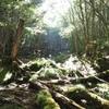 【初めてのテント泊にもおすすめ】八ヶ岳 苔の森 天狗岳