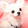 プロポリスワン・ペット用シャンプー(犬猫殺菌&ノミ・ダニ対策)の最安品を半日かけて調べてみた結果