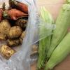 日曜日の収穫・ことしのジャガイモは少数精鋭?