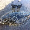 アジの泳がせ釣りでヒラメを釣る。福岡の波止にて泳がせ釣り!