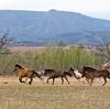 【ハービンジャー】種牡馬の特徴 芝の中長距離血統で小回り○