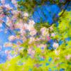 彩り染まる春の色 愛でる心も染まる春色