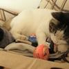 雪の日は家でワニャワニャ ~猫1+犬2+人2~
