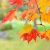 紅葉も散ってしまえば…