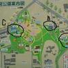 夜宮公園の花菖蒲