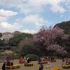 上野の東京国立博物館でお花見をしてきた。