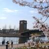 富山へ - vol.5 - 2021お花見 富岩運河環水公園