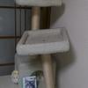 ネコ城落城・キッチン設置・エアコン取り付け・鍵交換・泡沫キャップのパッキン売ってたよぅ