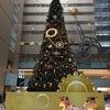 大きなクリスマスツリーを探して…