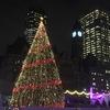 276日目:クリスマスツリーコレクション