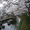 桜と大阪城ホール
