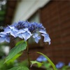 GRスナップ: 花・被写界深度
