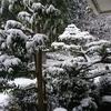 大晦日和歌山なのに大雪