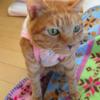 猫のかさぶた 猫のいぼ