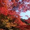 滋賀県)湖東三山:百済寺、金剛輪寺、西明寺。紅葉見頃。近江鉄道。