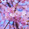 春に思い出す曲、春に聞きたい曲