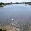江津湖の水位が低下、なぜ?