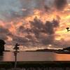 アサリの島流し 335日目 - さよならの形