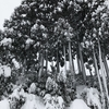 雪のため臨時休業(18日)